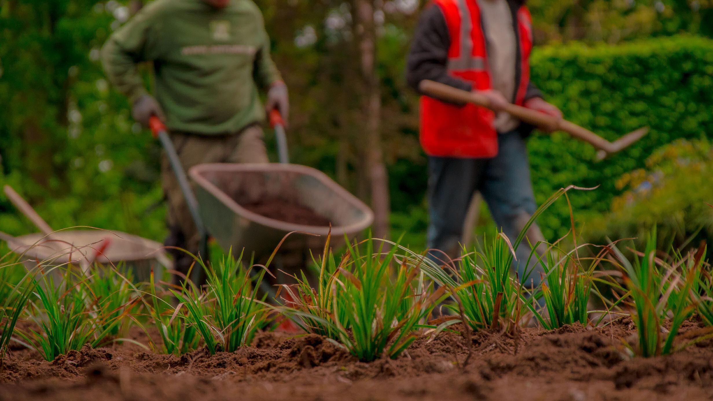 siergras, aanplanting, beplantingswerken, artune, grondwerken