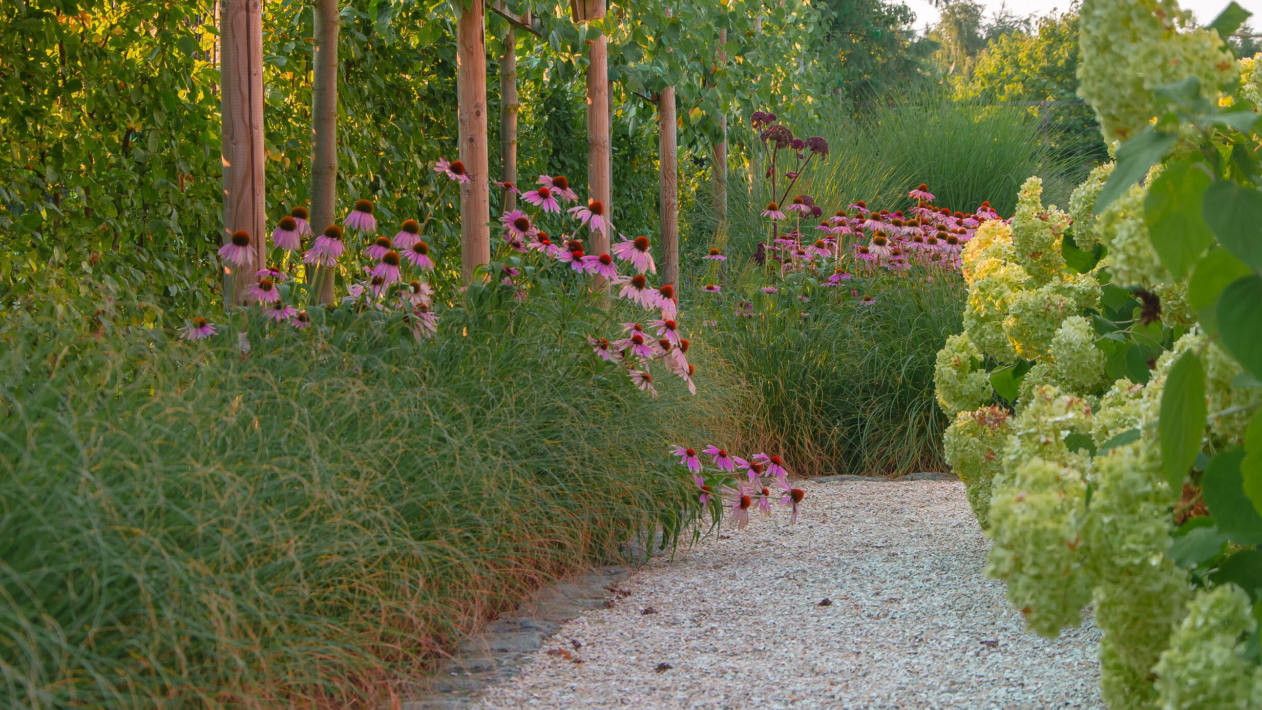 tuinpad, siergras, borderplant, hortensia, leilinde