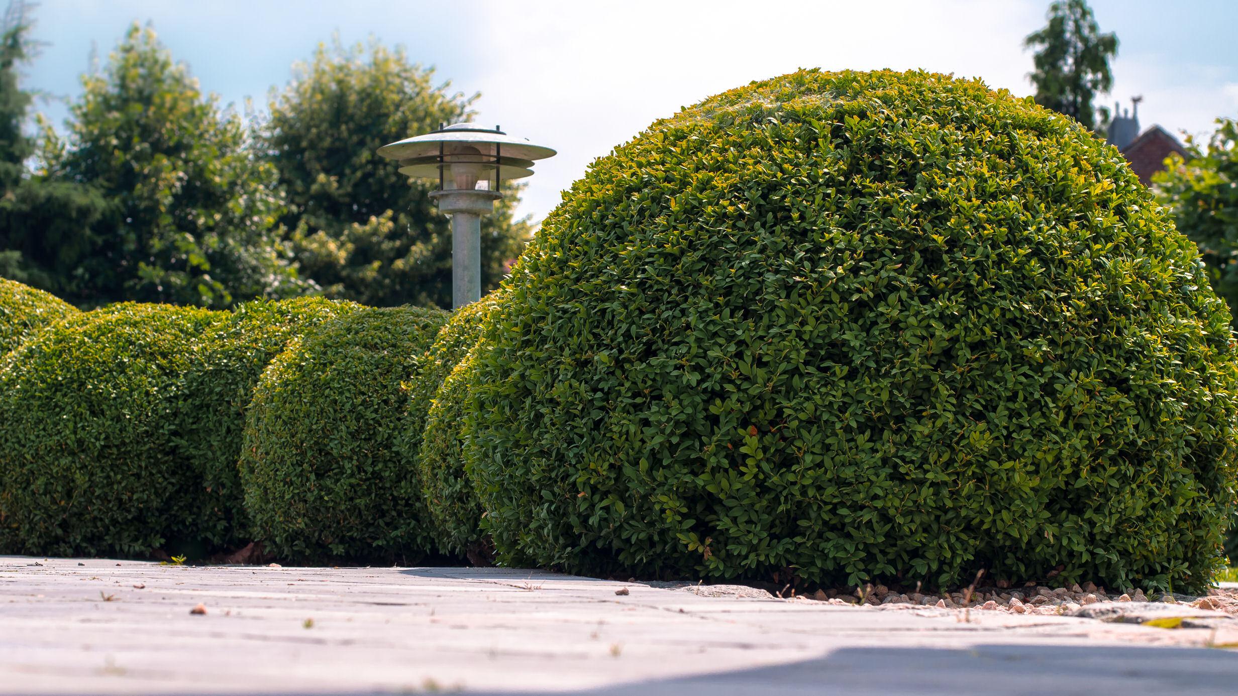 buxus, scheervorm, bolvormig, terras, tuinverlichting