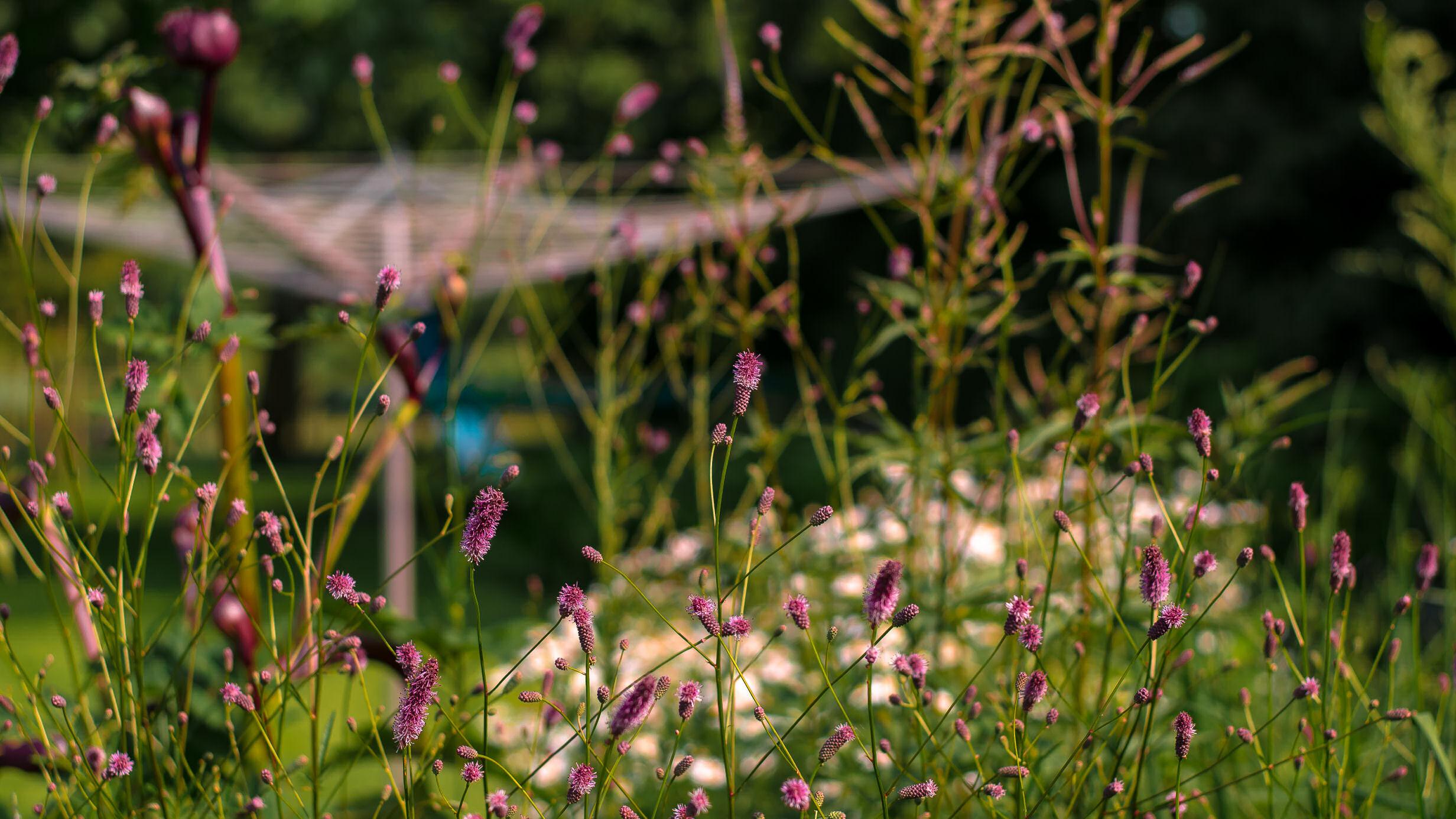 tuinaanleg, tuinarchitect, tuinaannemer, borderplant, bloemen