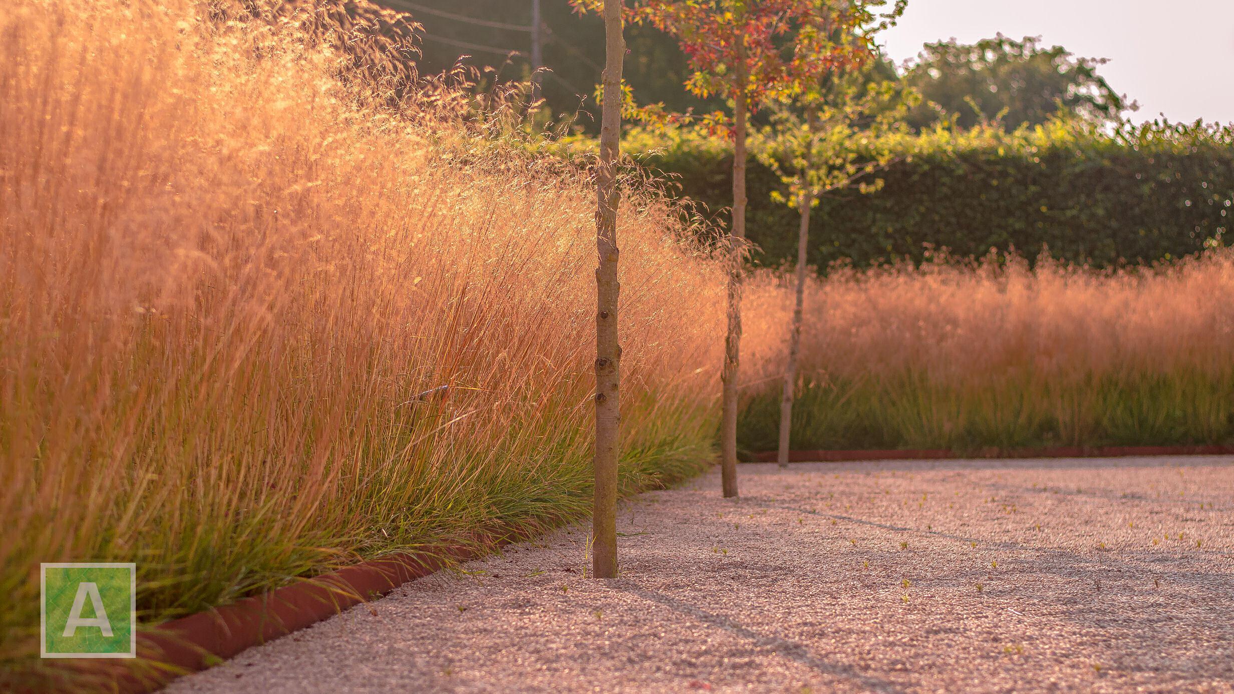 Deschampsia cespitosa, ruwe smele, siergras, massa-aanplanting, tuinaanleg