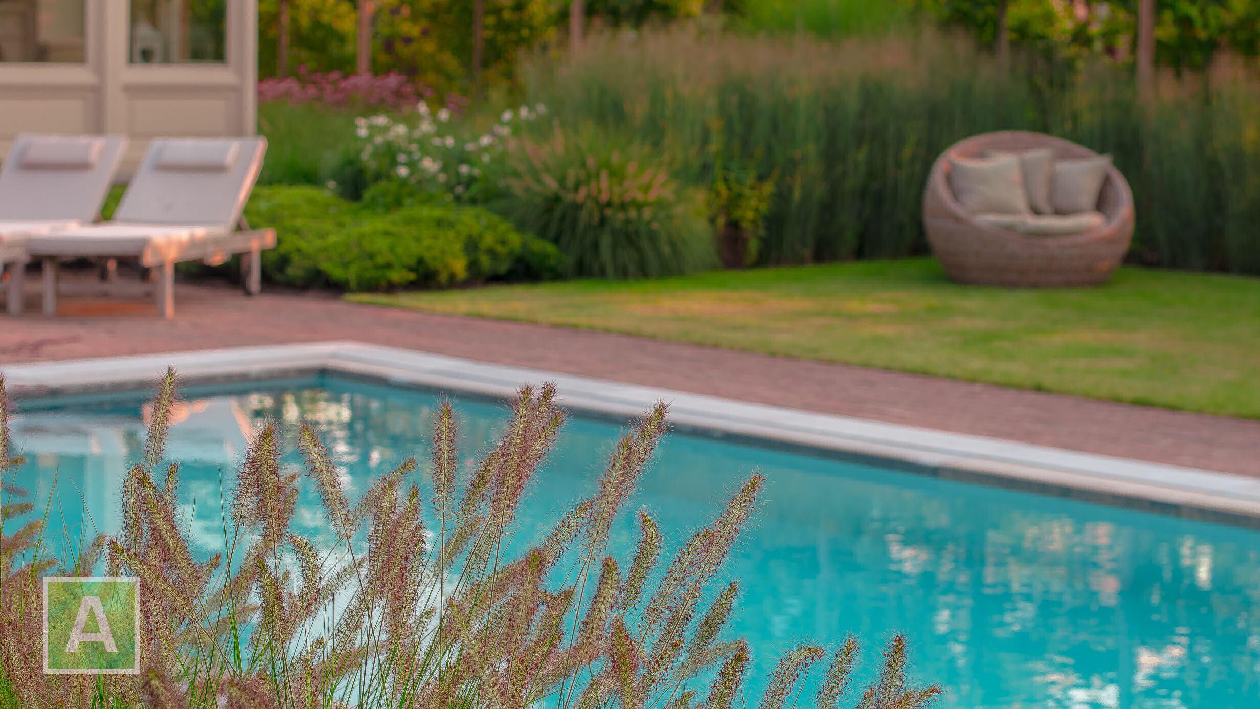 siergras, zwembad, lampenpoetsersgras, Pennisetum, tuin