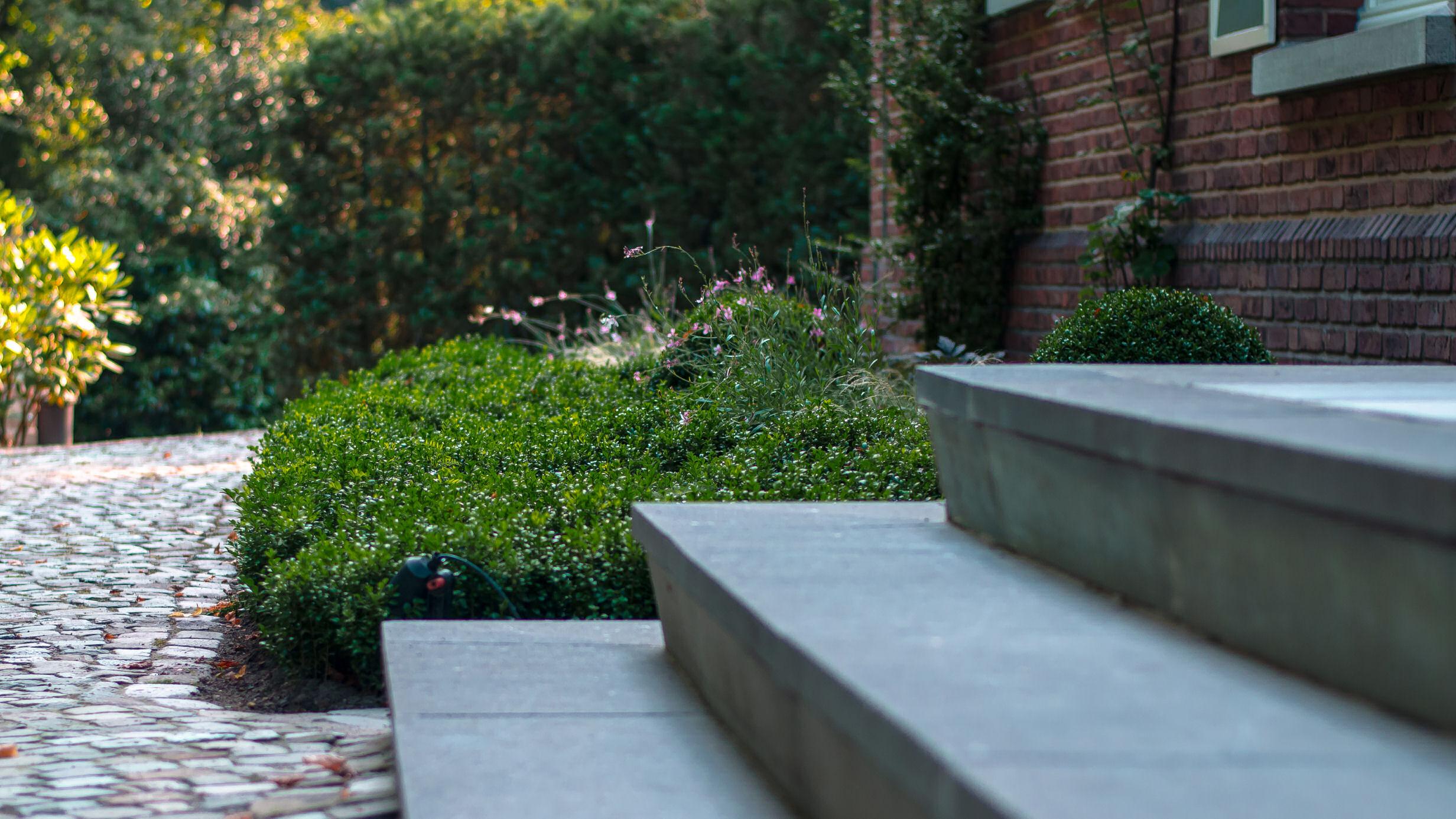 buxus, bodembedekker, tuin, tuinaanleg, trap