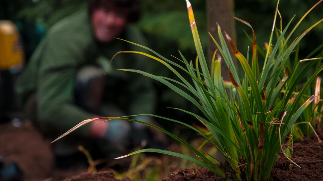 tuinontwerp, tuinaanleg, beplanting, aanplanting, tuinaannemer