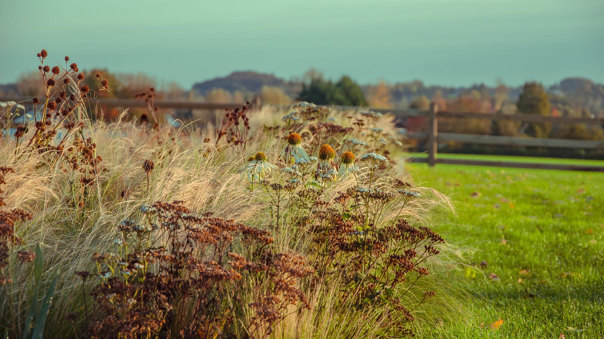 herfstkleuren, grassenborder, terras, gazon